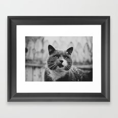 The Gray Cat Framed Art Print