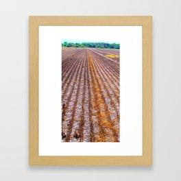 Reaped Framed Art Print