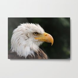 MM - Grinning bald eagle Metal Print