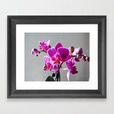 Purple Orchid Framed Art Print