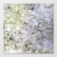 hydrangea Canvas Prints featuring Hydrangea by Awesome Palette