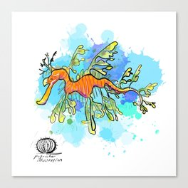Leafy Sea Dragon Canvas Print