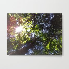 PINEWOOD IN ASIAGO, VENETO, ITALY Metal Print