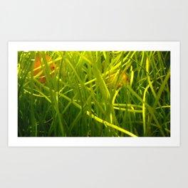 acvarium - green calm Art Print