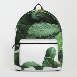 The green leaf of the Euphorbia Backpack