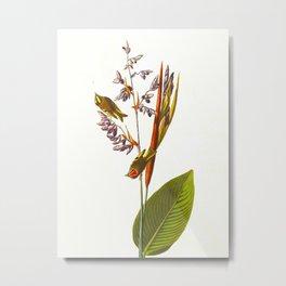 Golden crested-Wren Vintage Scientific Bird Illustration Metal Print
