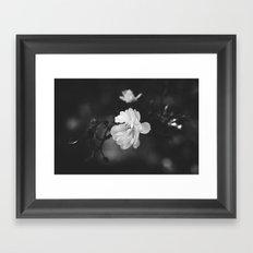 february flower Framed Art Print
