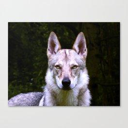 Czech Wolfdog Digit. Edition Canvas Print