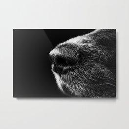 Cold Nose Metal Print