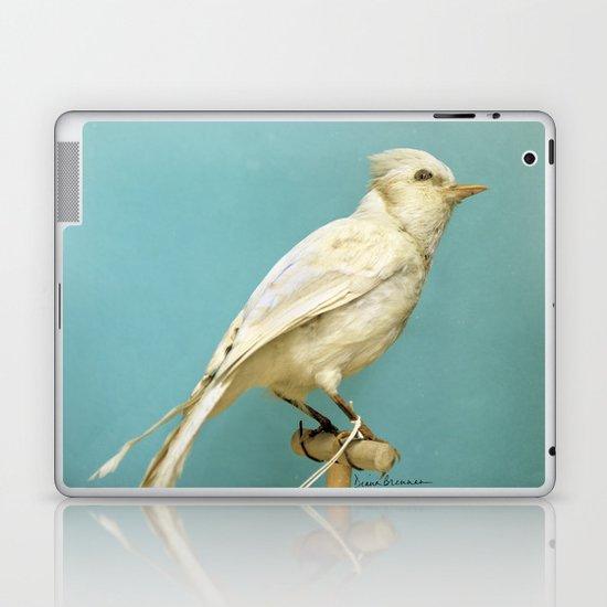 Albino Blue Jay - Square Format Natural History Bird Portrait Laptop & iPad Skin