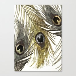 Gold and Silver Peacock Feathers Canvas Print