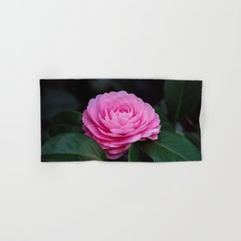 Pink Perfection Camellia Japonica is Blooming Hand & Bath Towel