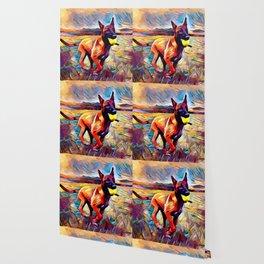 Malinois Wallpaper