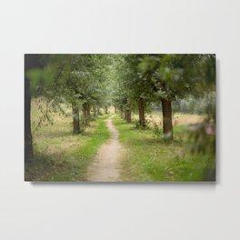 Willow Lane II Metal Print