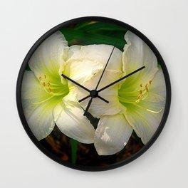 Glowing white daylily flowers - Hemerocallis Indy Seductress Wall Clock