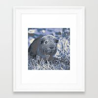 guinea pig Framed Art Prints featuring blue guinea pig by MehrFarbeimLeben