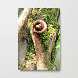 Unopened Tree Fern Metal Print