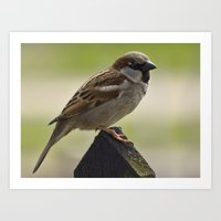 sparrow Art Prints featuring Sparrow by PICSL8