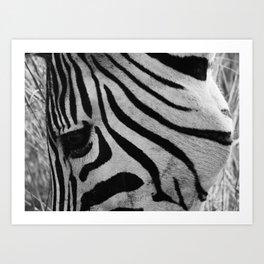 In the eye of the Zebra Art Print