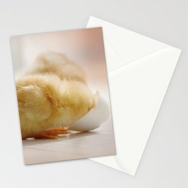little chick looking for his origin Stationery Cards