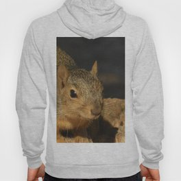 Adorable Squirrel Hoody