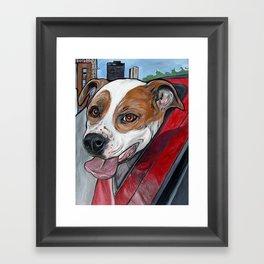 Pit Bull Joy Ride Framed Art Print