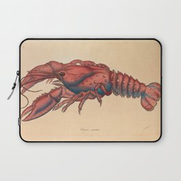 Serrated Lobster, Cancer serratus Laptop Sleeve