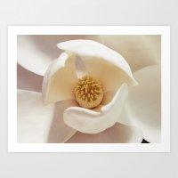 magnolia Art Prints featuring Magnolia by Esther Ní Dhonnacha