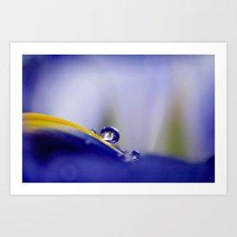 Jewel of the Iris Art Print