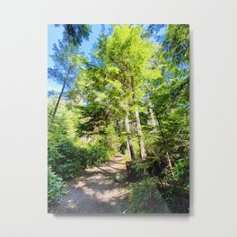 Hiking Trails & PNW Trees in Point Defiance Washington Metal Print