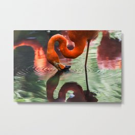 Tropical Flamingo Kiss Metal Print