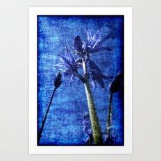 Bluebell Denim Art Print