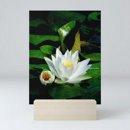 The perfect white water lily Mini Art Print