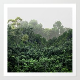 Tropical Foggy Forest Art Print