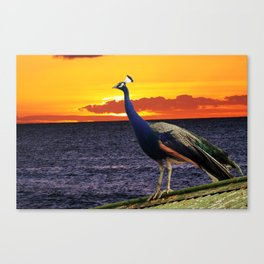 Peacock Ocean Canvas Print