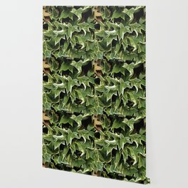 Variegated Ivy Wallpaper