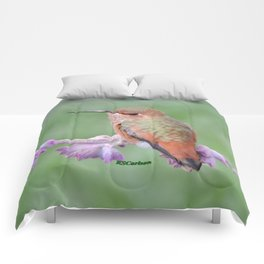 DO NOT Raid My Patch of Sage Comforters