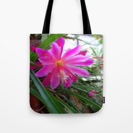 "BLOOMING FUCHSIA PINK "" ORCHID CACTUS"" FLOWER Tote Bag"