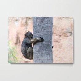 Howler Monkey Hang on tight Metal Print