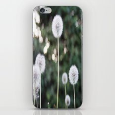 Dandelions iPhone & iPod Skin