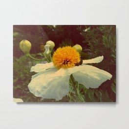 Secret Garden | White poppy  Metal Print