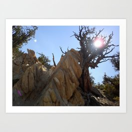 Tree leaning on rock Art Print