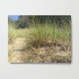 Michigan Beach Grass Metal Print