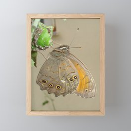 Meadow Brown Butterfly Feeding On Aphids Framed Mini Art Print