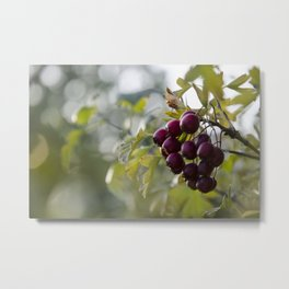 Berry Bokeh Metal Print