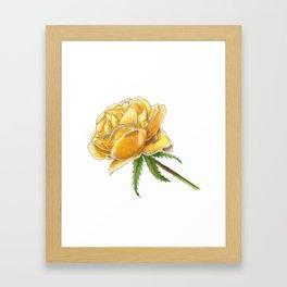 Yellow Rose on white Framed Art Print