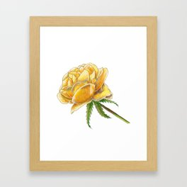 Yellow Rose on white Framed Art Print