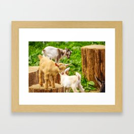 Baby Goats Playing Framed Art Print