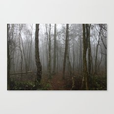 Foggy Woods Canvas Print
