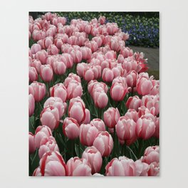 Springy Bulbs Canvas Print